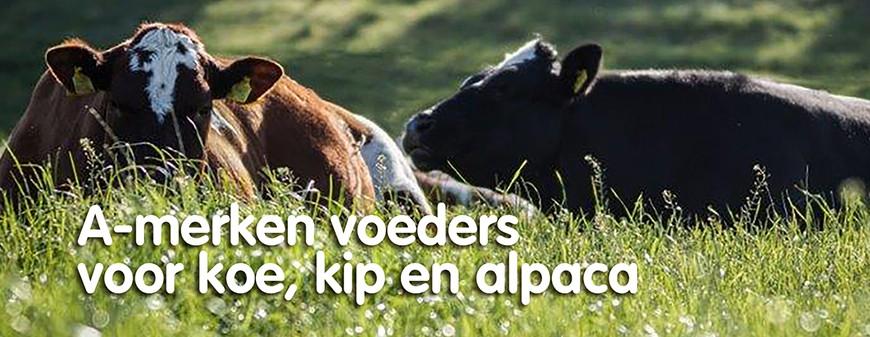 A-merken voeders voor koe, kip en alpaca